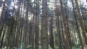 Cuando dejamos atrás los campos de cultivo los bosques hacen acto de presencia..